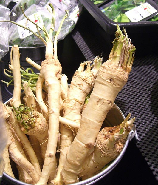 Horseadish